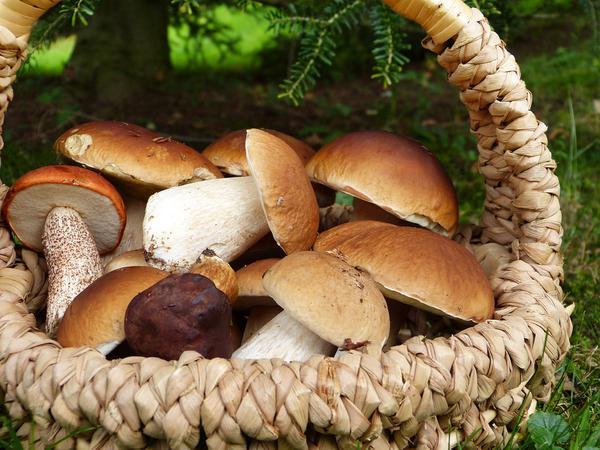 Najlepsze grzybnie mikoryzowe